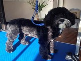 essex dog grooming