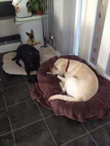 Rosie jaycee bed